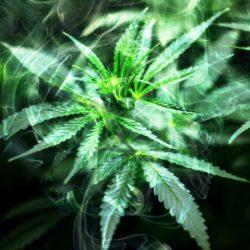 4/20 Reiki&Cannabis